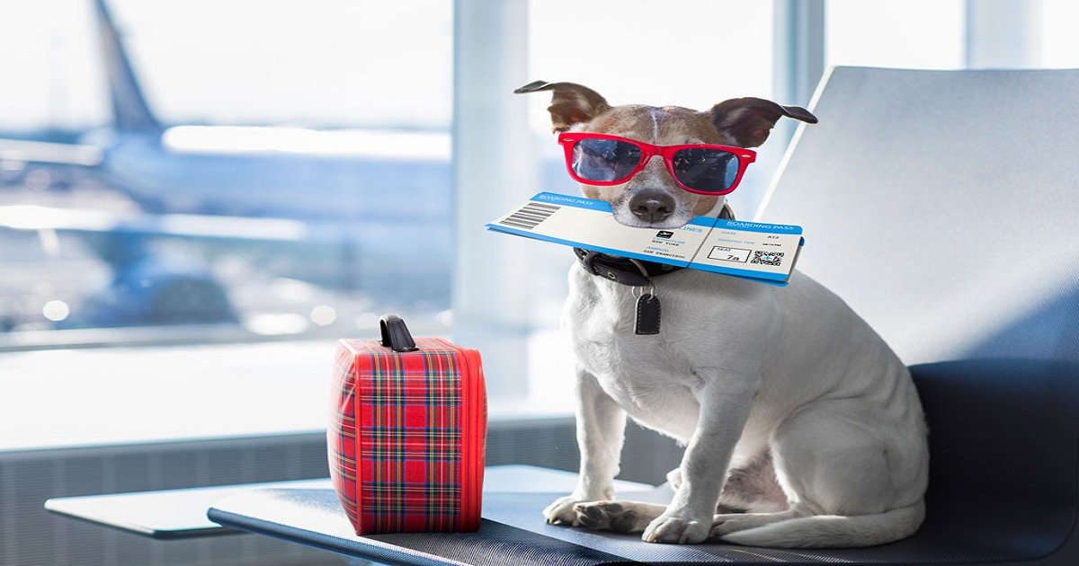 TOP 10 TIPS WHEN FLYING WITH YOUR PETS